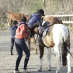 Il Cavallino 3