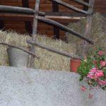 fedta delle corti a pellio; sagre e feste tradizionali